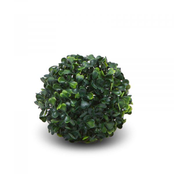 Buxus - majhen - ø 13 cm